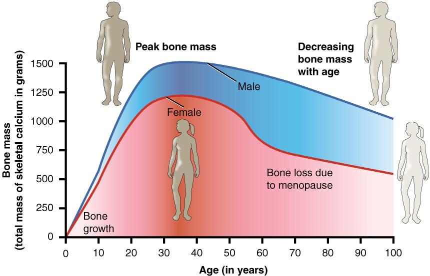 klimakteriet ålder